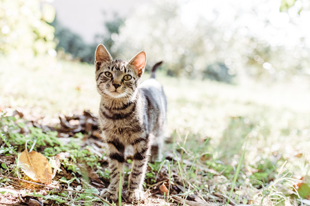 Domestic cat is looking at the camera while playing in the garden Stock Photo