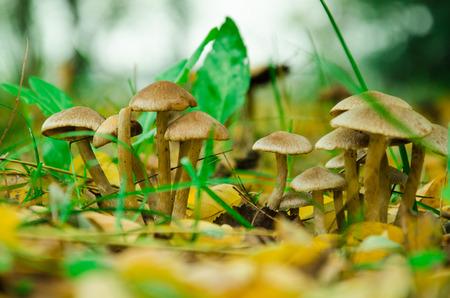 underwood: close up of mushrooms in the underwood