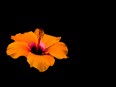 pestel: view of an orange flower in the dark