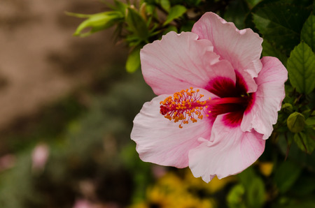 pestel: view of an pink and red flower on a branch