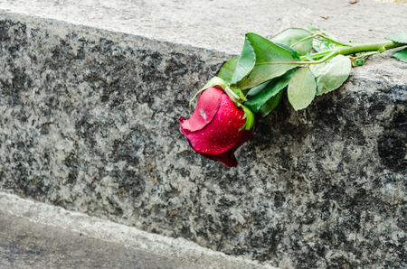vain: one red roses is laying in the street , symbol of a love in vain Stock Photo