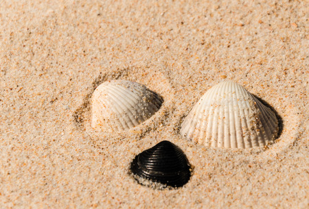 grouped: a group of three purple shell grouped on a beach Stock Photo