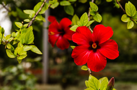pestel: view of an red flower on a branch