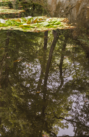 refelction: trees reflect themselves on a lake with nymphs Stock Photo