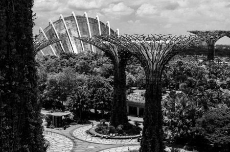 view of the supertree at the garden by the bay. sngapore. asia. future. environment. black and white