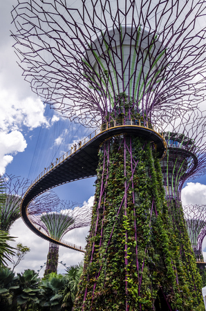view of the supertree at the garden by the bay. sngapore. asia. future. environment. Editorial