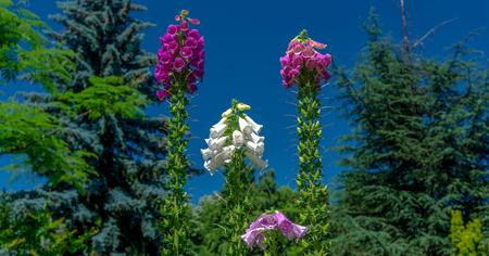 Flowers Close Up Blue Sky Backround photo