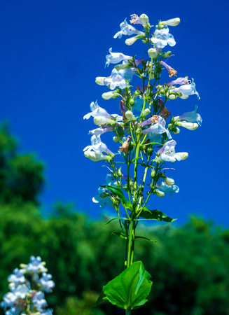 White Flower Blue Sky Backround
