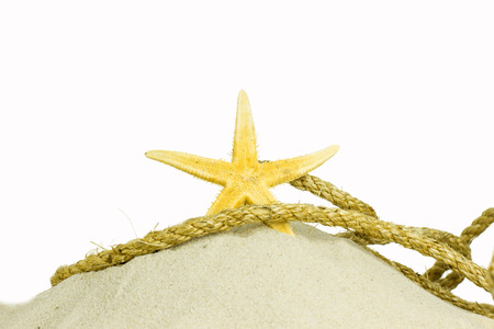 shell and starfish on beach isolated on a white background photo