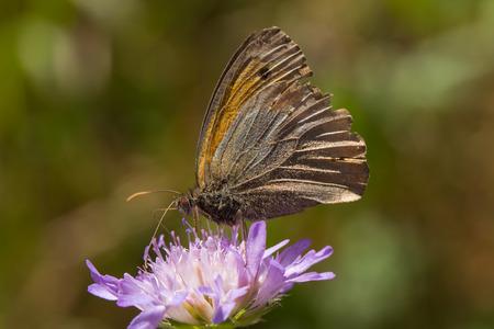 butterfly an flower photo