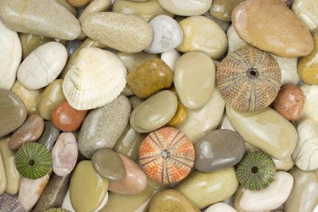 pebles: pebles and sea urchin