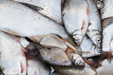 rutilus: Fresh fish background