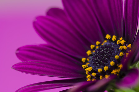 campo de flores: flor p�rpura primer plano Foto de archivo