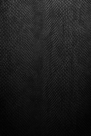 snake skin black Stockfoto
