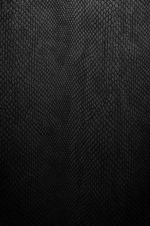 accesory: snake skin black Stock Photo