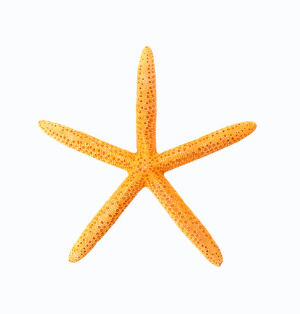 seastar: The starfish on a white background Stock Photo