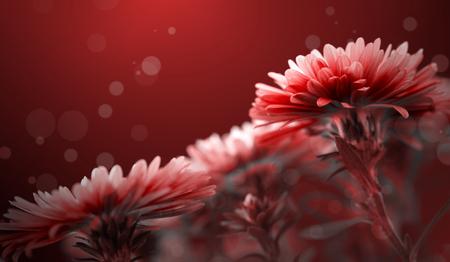 Flor de fondo rojo Foto de archivo