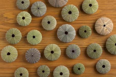 sea urchins on wooden  texture