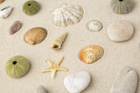 Sea shells and star fish on the sand Standard-Bild