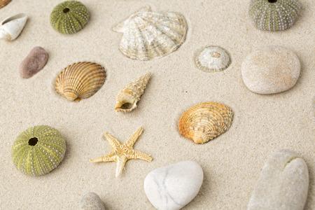 Zeeschelpen en stervissen op het zand