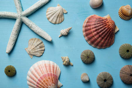 Sea stars and shells on wooden background Stock Photo