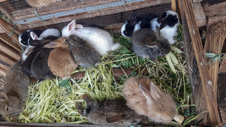 Group of young rabbits in a farm. Stock Photo