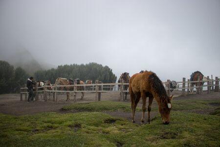 Horses in the nature near the TelefériQo station, Quito, Ecuador