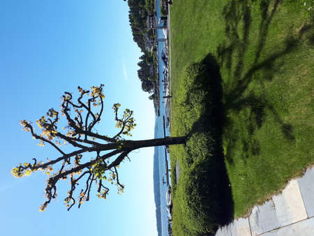 Young tree against the background of the blue sky and the sea
