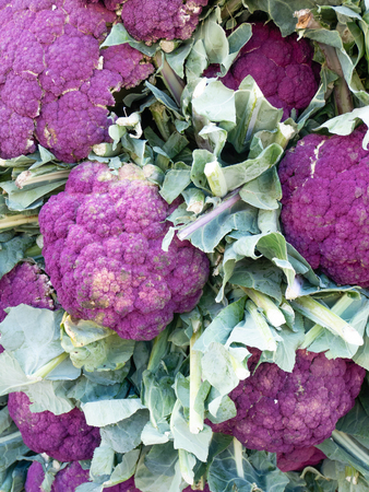Beautiful background of purple cauliflowers, from organic cultivation. Flatlay view