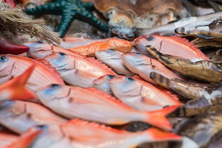 Spezielle Keramikdarstellungen von für das Mittelmeer typischen Fischen in verschiedenen Ansichten