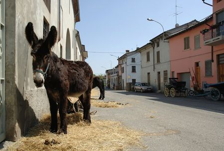 pv: Arena Po (Pv),Lombardy,Italy,a donkey in the road of the country