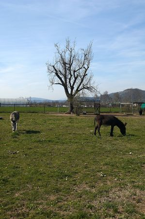 Gussago (Bs),Franciacorta,Lombardy,Italy, donkeys in a fence to pasture photo