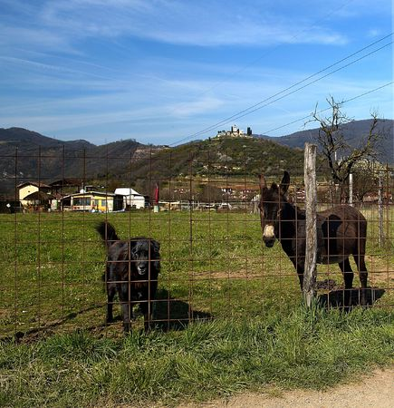 Gussago (Bs),Franciacorta,Lombardy,Italy,a donkeys and a dog in a fence to pasture photo