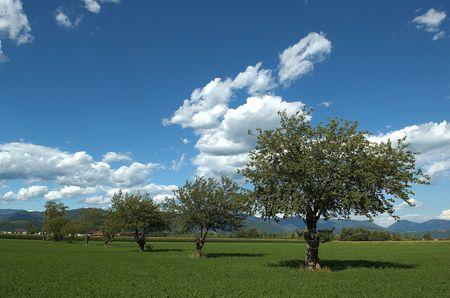 Castegnato (Bs), moreras Franciacorta, Lombardía (Italia), en un campo  Foto de archivo - 6218889