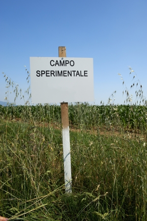the experimental: Rodengo  Bs ,Franciacorta, Italy,an experimental field for the production of corn Stock Photo
