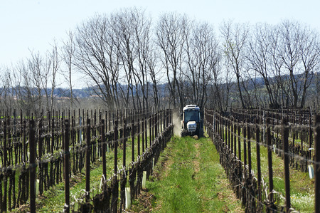 wineyard: Passirano (Bs), Franciacorta,Italy, the plowing of a wineyard