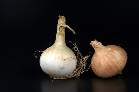 biological: some biological onions on a black background Stock Photo
