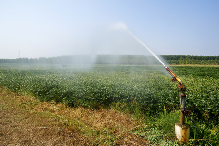 ailment: Stagno Lombardo (Cr),artificial irrigation system in a field of soybean Stock Photo