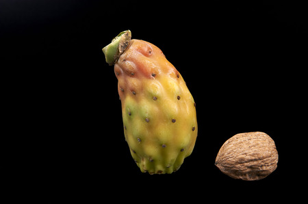 prickly pear: a prickly pear and a walnut on a black background Stock Photo