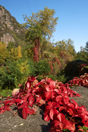 greaves: Darfo (Bs), Valcamonica,Italy,  some  autumn colors