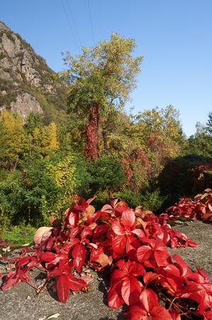 chicharrones: Darfo (Bs), Valcamonica,Italy,  some  autumn colors