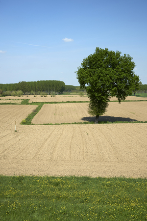po: Casalmaggiore (Cr),Italy, agricultural fields in the floodplain of the River Po