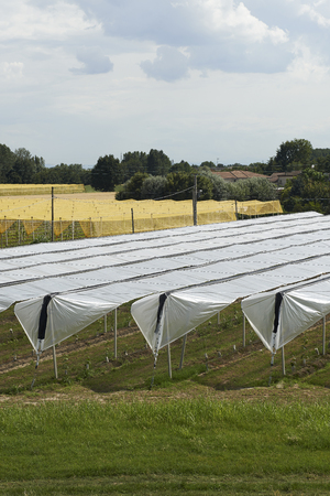 hail: Felonica (Mn), Italy, some tarpaulins resistant to hail