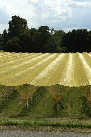 resistant: Felonica (Mn), Italy, some tarpaulins resistant to hail