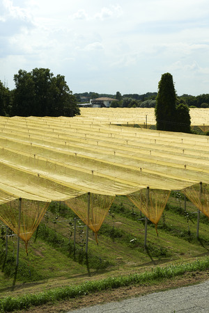 mn: Felonica (Mn), Italy, some tarpaulins resistant to hail