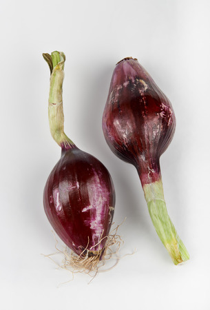 ailment: some onions on white background