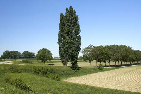 Motta Balufi (Cr), Italien, Blick auf die Auen des Flusses Po Standard-Bild - 77426434