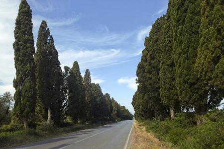 Bogheri (Li),Italy, the historic cypress avenue