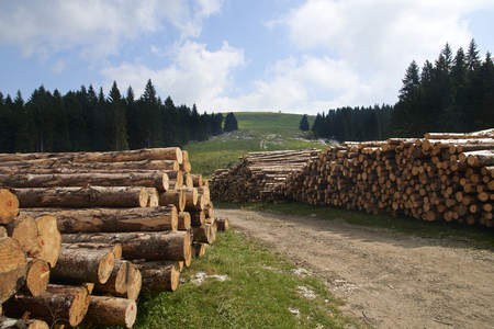 Gallio (Vi),Asiago Plateau,Italy, some timber on the hills Foto de archivo - 112600229