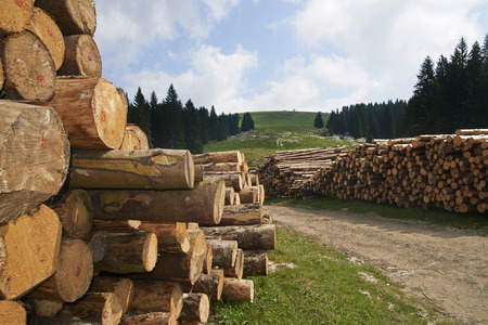 Gallio (Vi),Asiago Plateau,Italy, some timber on the hills Foto de archivo - 112600230